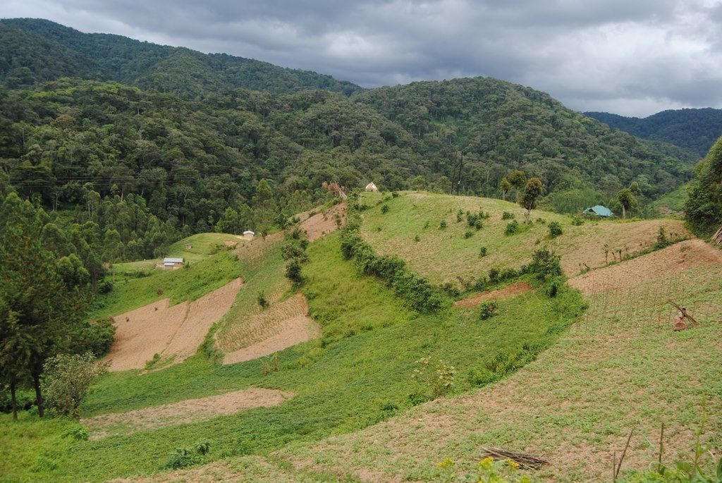 In River Nile basin region, natural forests are mostly in upstream countries. Reasons for forestland grab in these countries include production of food crops, nonfood agriculture commodities and timber production. Image by Fredrick Mugira. Uganda, 2018.