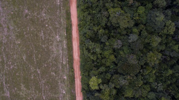Deforested forest area next to the Guariba-Roosevelt Extractive Reserve. Image by Caio Mota. Brazil, 2020.