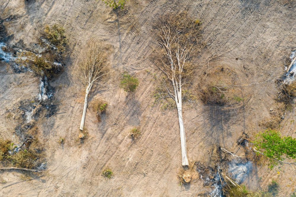 Aerial view of cut trees in the Beng Per Wildlife Sanctuary. Image by Sean Gallagher. Cambodia, 2020.