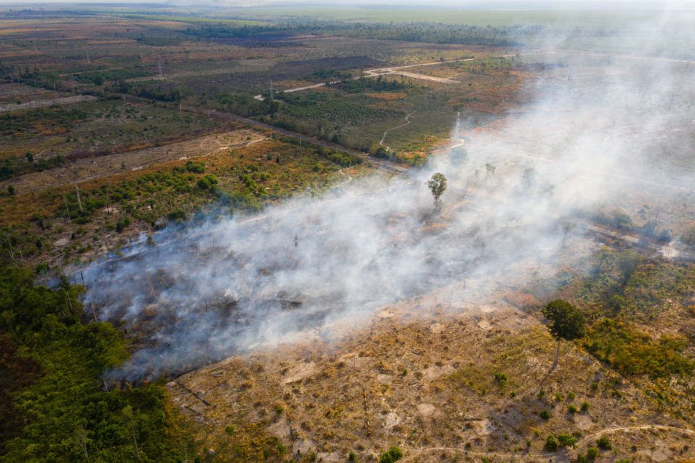 A burning field in the Beng Per Wildlife Sanctuary, in northern Cambodia. Beng Per is a sanctuary in name only as most of the land has been sold by the government for agricultural concessions and rubber plantations. Image by Sean Gallagher. Cambodia, 2020.