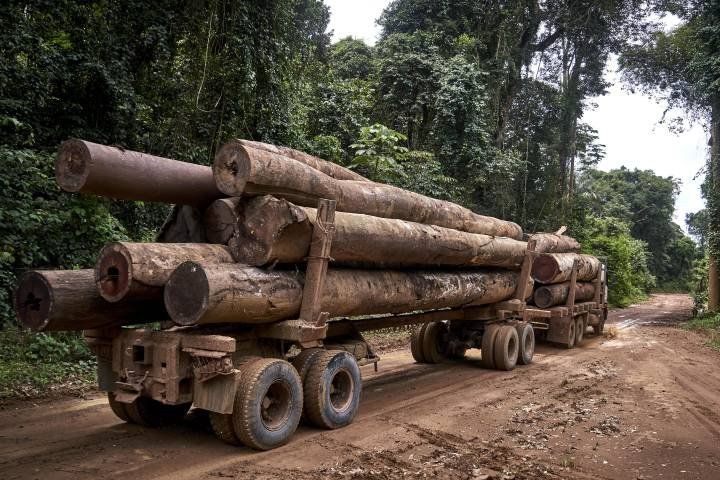 A transportation truck of the loggers in indigenous Maró territory. Brazil, 2019. Image by Pablo Albarenga