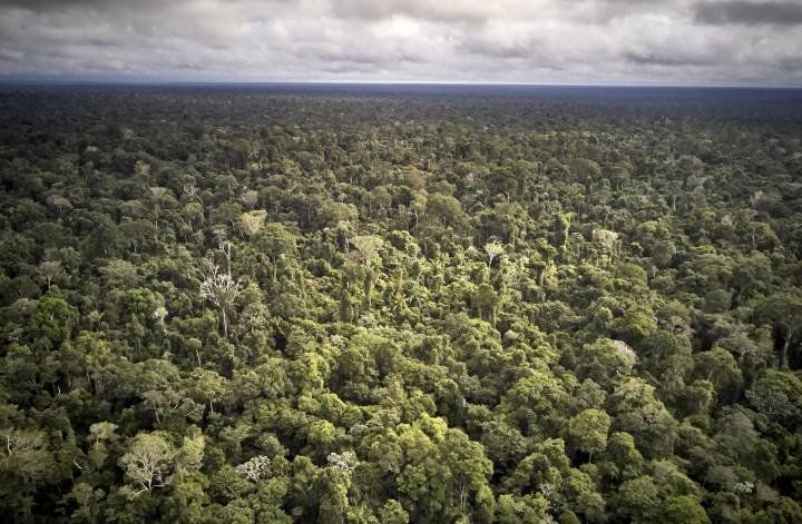 Aerial view of Maró Indigenous Territory. Brazil, 2019. Image by Pablo Albarenga.
